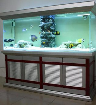 A Guide For Buying Aquarium Tanks